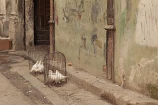 Doves, Havana Photograph: Georgia Korossi/11polaroids
