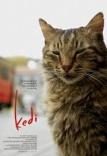 Kedi film poster