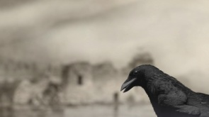 A CGI-animated blackbird with Andy Holden's voice relates the history of egg-collecting, 2017, Andy Holden and Peter Holden | Natural Selection at the former Newington Library, London, 10 September – 26 November 2017